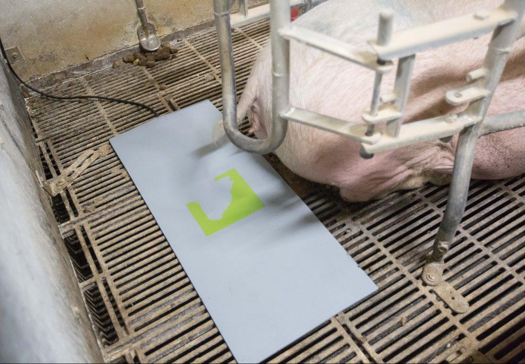 FarrowMat holder de nyfødte grise varme